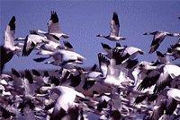 Atterrissage d'urgence de Ryanair à cause des oiseaux
