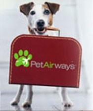 Pet Airways: Une compagnie pour les animaux de compagnie