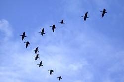 Des oiseaux endommagent un des deux tubes de pitot d'un avion de Royal Air Maroc
