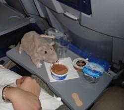 Un rat contraint un avion de Alaska Airlines à faire demi-tour