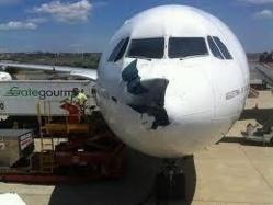 Un avion d'Iberia endommagé par un vautour fauve