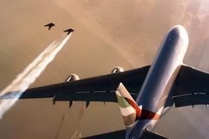 Deux hommes volent à proximité d'un A380 (Vidéo)