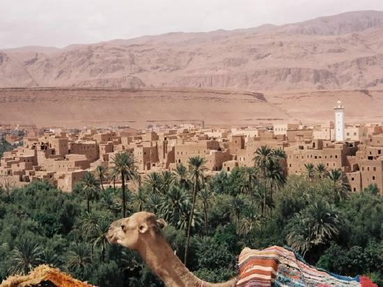 Royal Air Maroc: Une meilleure offre sur Ouarzazate et Zagora